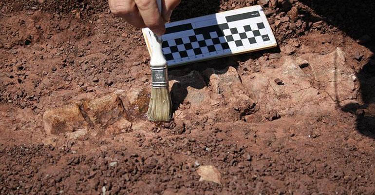 scavi_paleontologi