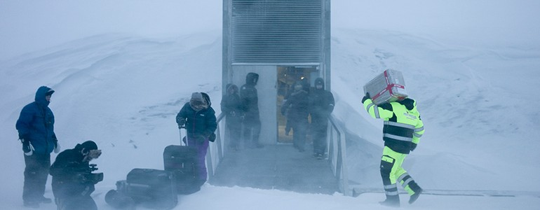 """I semi dell'Università di Pavia nella """"banca"""" delle Isole Svalbard (foto)"""