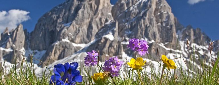 L'Università di Pavia per la salvaguardia della flora alpina: i semi sono al sicuro (video)