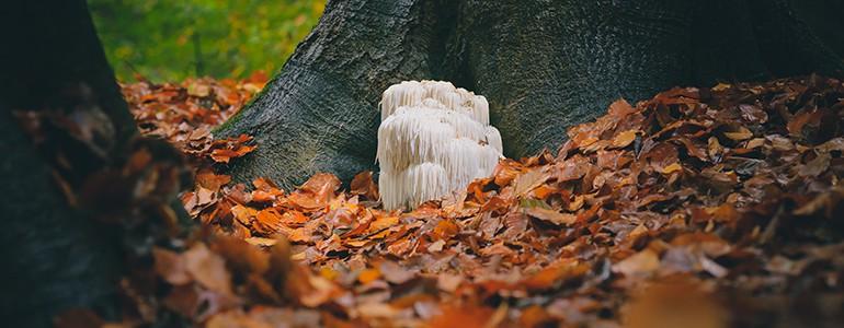 Dall'Università di Pavia lo studio di un fungo contro l'invecchiamento della memoria